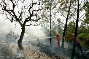 La mejor solución para reducir el impacto negativo de los incendios forestales