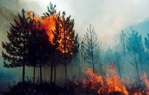 Factores que influyen a los incendios forestales