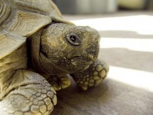 Culpan a una tortuga de causar un incendio