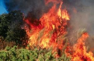 como afectan los incendios