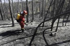 tipos de incendios forestales